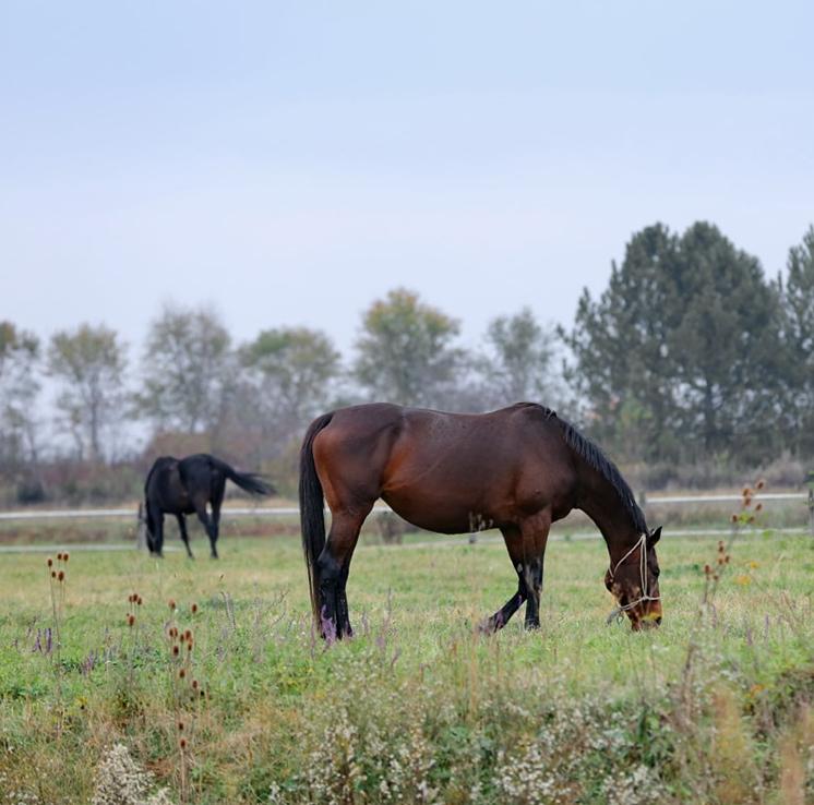 Que risque-t-on juridiquement en construisant un box ou un abri pour chevaux sans autorisation ?